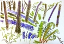 225‐7155 <b>bluebells & ferns</b> mendips wax crayon 38 x 56 cms £250&#8208;Greg&nbsp;Poole