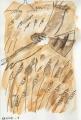 21‐4317<b>hen harrier</b>‐GregPoole