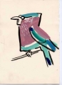 150‐4419 <b>indian roller</b>   A4 (29.7 x 21cms) £60&#8208;Greg&nbsp;Poole
