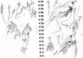 101‐5698<b>fieldfare in ash,poplar, mistletoe</b>A5 sketchbook‐GregPoole