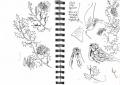 redwings on holly‐GregPoole