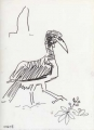 abysinnian ground hornbill ‐ ink pen ‐ 24 x 18 cms ‐ £30 ‐     ethiopia‐Greg Poole
