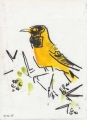 black-headed oriole ‐ gouache & wax crayon ‐ 24 x 18 cms ‐ £40 ‐     ethiopia‐Greg Poole