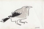 bush crow ‐ gouache & ink pen ‐ 12 x 18 cms ‐ £30 ‐ ethiopia‐Greg Poole