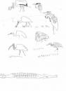 <b>crocodile, ibis, egrets, heron, spoonbill & stork</b>   inkpen  A3  £50‐GregPoole