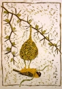 <b>masked weaver nest building 2</b>     reduction woodcut   73 x 52 cms   £270&#8208;Greg&nbsp;Poole
