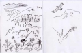 <b>golan heights flora & short-toed eagle</b>   ink pen  18 x 28 cms &#8208;Greg&nbsp;Poole
