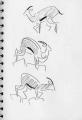 <b>gazelles, golan heights</b>   ink pen  A5 sketchbook ‐GregPoole