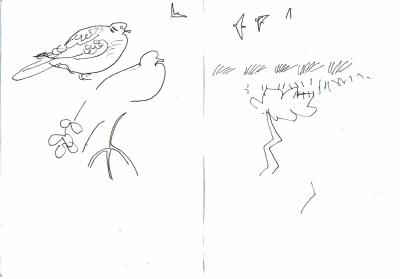 turtle doves & sand martins