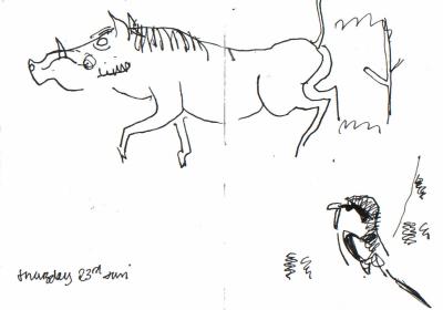 woodchat & warthog