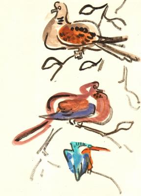 <i></i><br/>turtle & laughing doves, malachite kingfisher