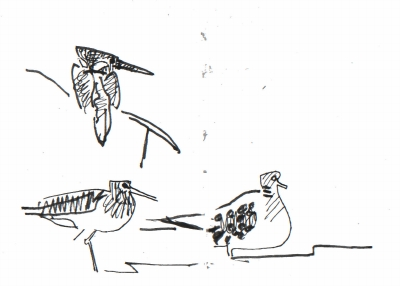<i></i><br/>malachite kingfisher, green sandpiper & turtle dove