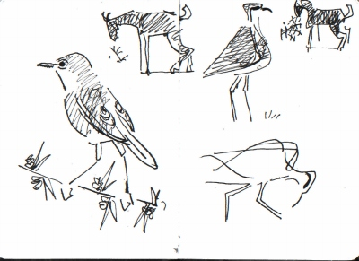 whitethroat, coursers & goats