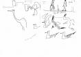 218‐6939<b>herons, slender billed & grey headed gulls </b>st louisink penA5 sketchbook‐GregPoole
