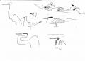 218‐6940<b>herons, caspian tern & slender billed gulls</b>st louisink penA5 sketchbook‐GregPoole
