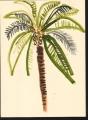 218‐6948<b>palm study</b>st louisgouache38 x 28 cms‐GregPoole