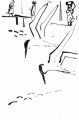 218‐6963<b>sandwich terns</b>st louisdip pen & indian ink38 x 28 cms‐GregPoole