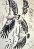 <b>griffon vultures 2</b>    graphite  A3 (42 x 29.7 cms)  £60‐GregPoole