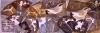 1‐5030<b>wheatears, sea holly 2</b>polytyrene print20 x 57 cm£POA‐GregPoole