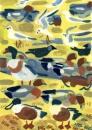 21‐4435<b>shoveler, wigeon, shelduck, jackdaw & BH gulls</b>gouacheA4 (29.7 x 21cms)£110&#8208;Greg&nbsp;Poole