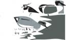 teal,lapwing & shoveler‐GregPoole